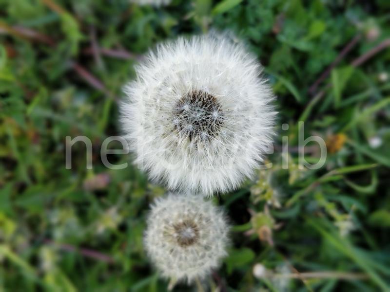 nerdweib-pusteblume-drucktest-saal